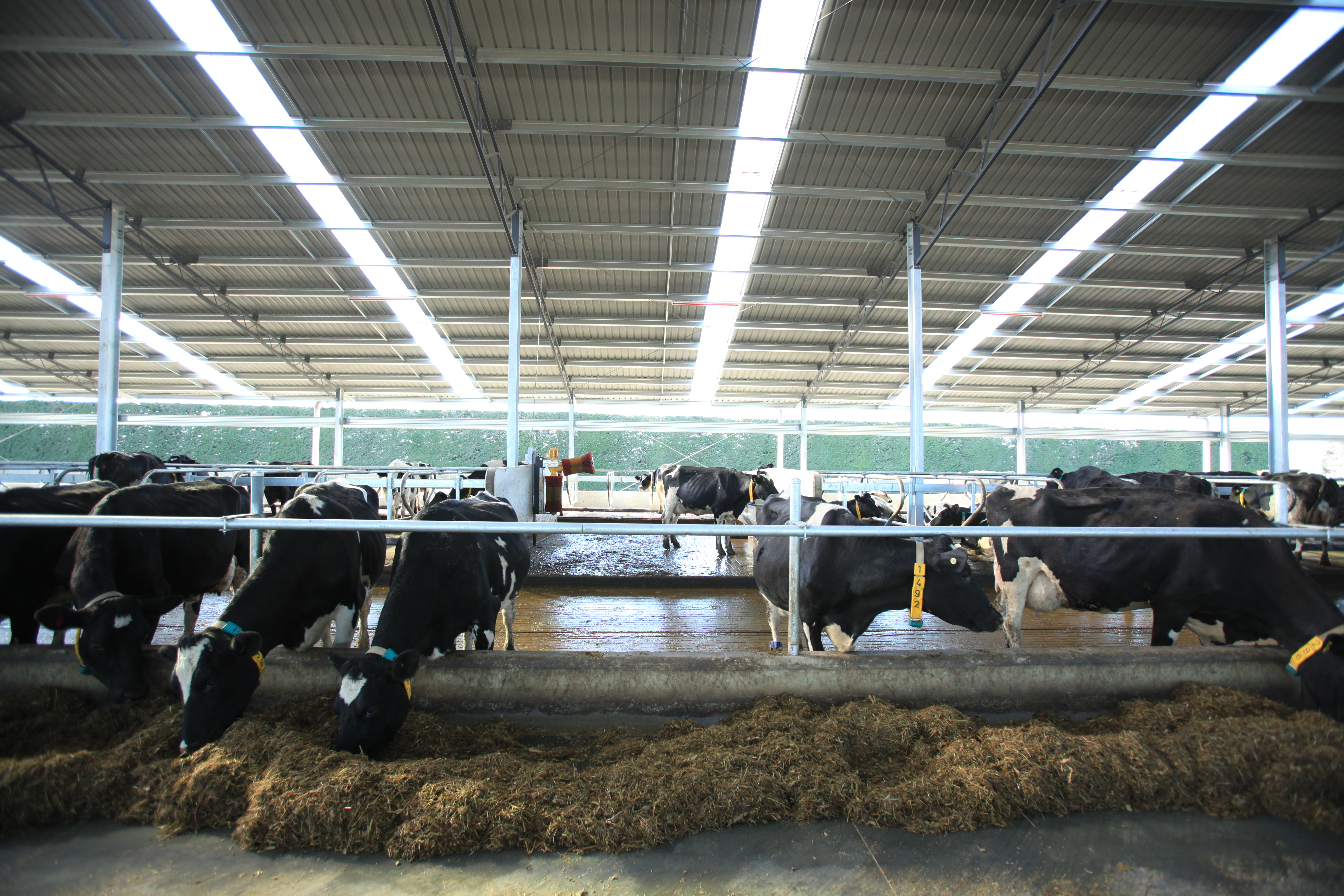 ^ Dairy Shed & Barn Systems Dairy echnology » Dairy Barn Systems