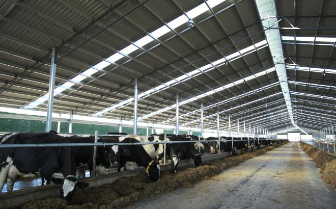 View from inside a Calder Stewart Dairy Barn System