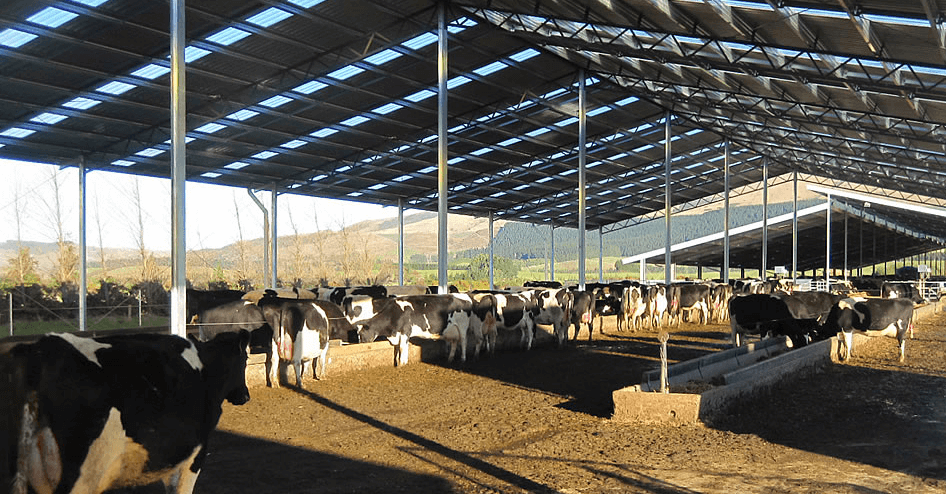 Dairy Shed Amp Barn Systems Dairy Technology 187 Dairy Barn